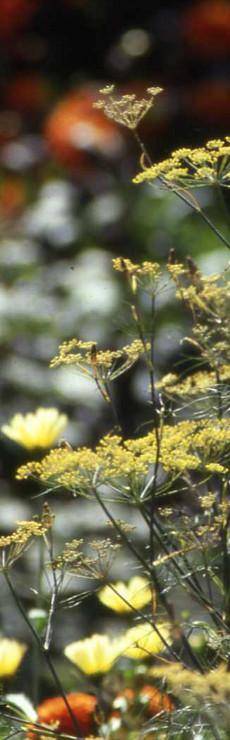 Havearkitekter: hanne lynge, ellen laerke, lilly ravn