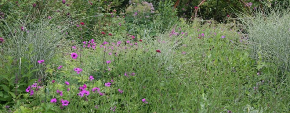 Haveindretning. grøftekant og blomstereng til 'vilde' haver