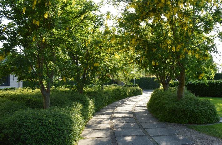 Havedesign med bunddække under træer i allé giver nem have
